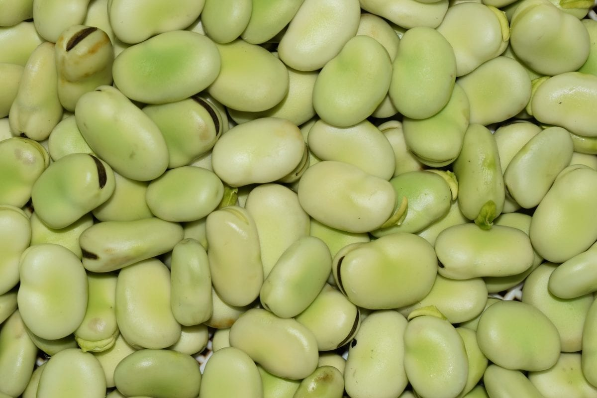 Are Broad Beans Low FODMAP